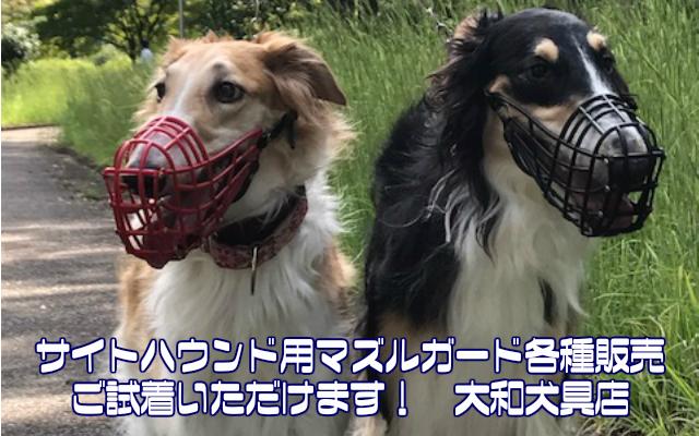 サイトハウンドフェス 大和犬具店